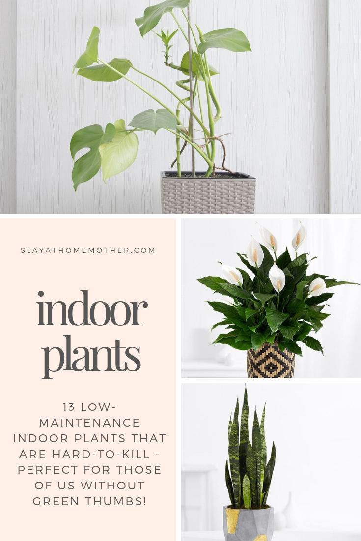 13 Low-Maintenance Indoor Plants That Are Hard To Kill #houseplants #plants #slayathomemother - SlayAtHomeMother.com