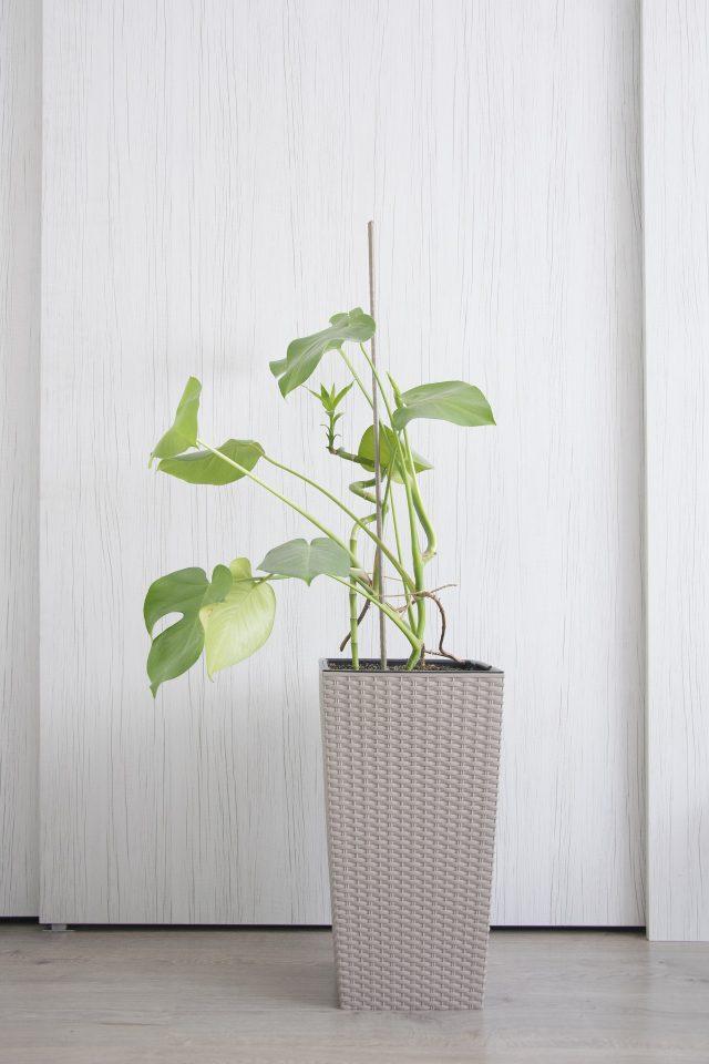 Hard To Kill Houseplants - SlayAtHomeMother.com