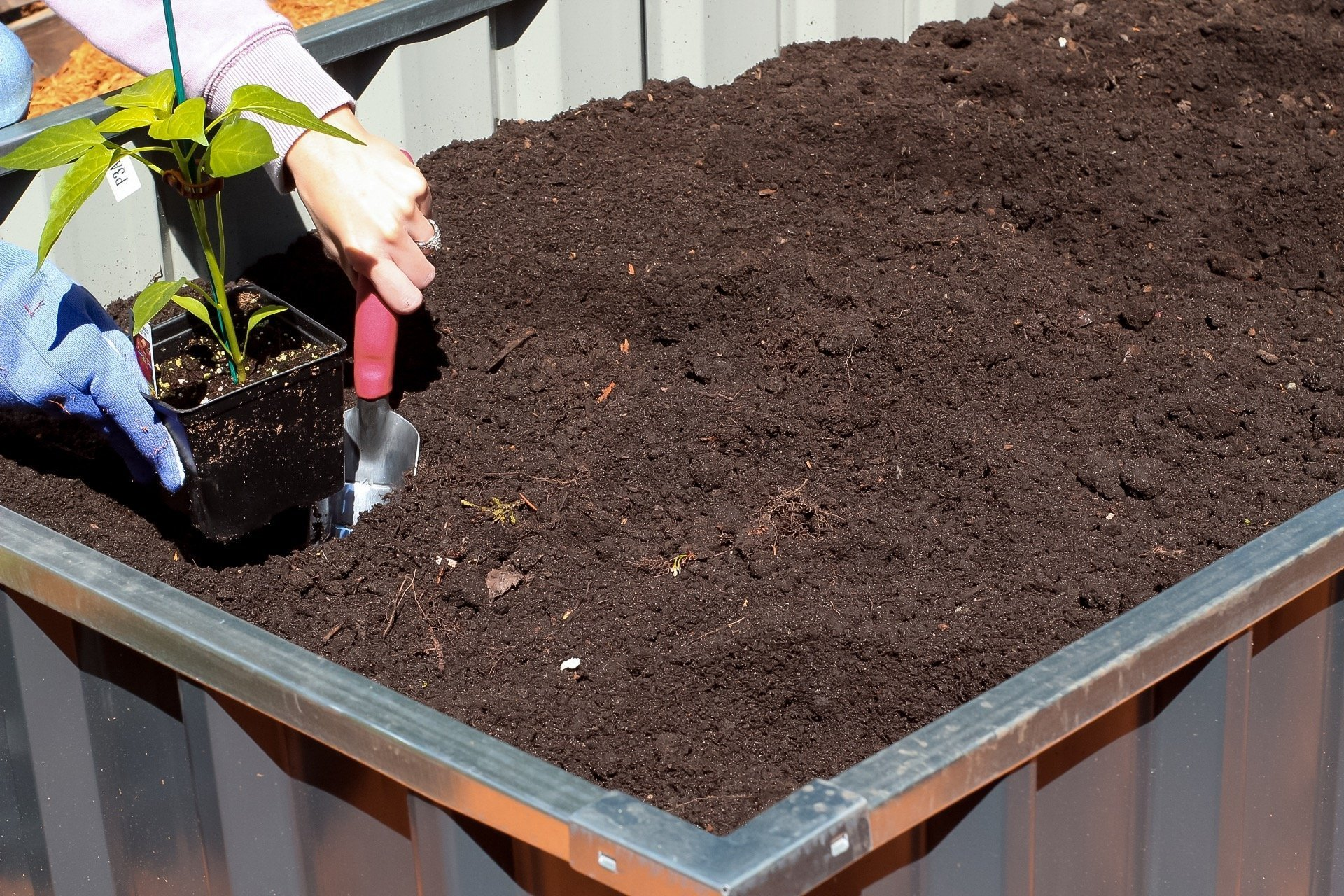 gardening tips - planting peppers