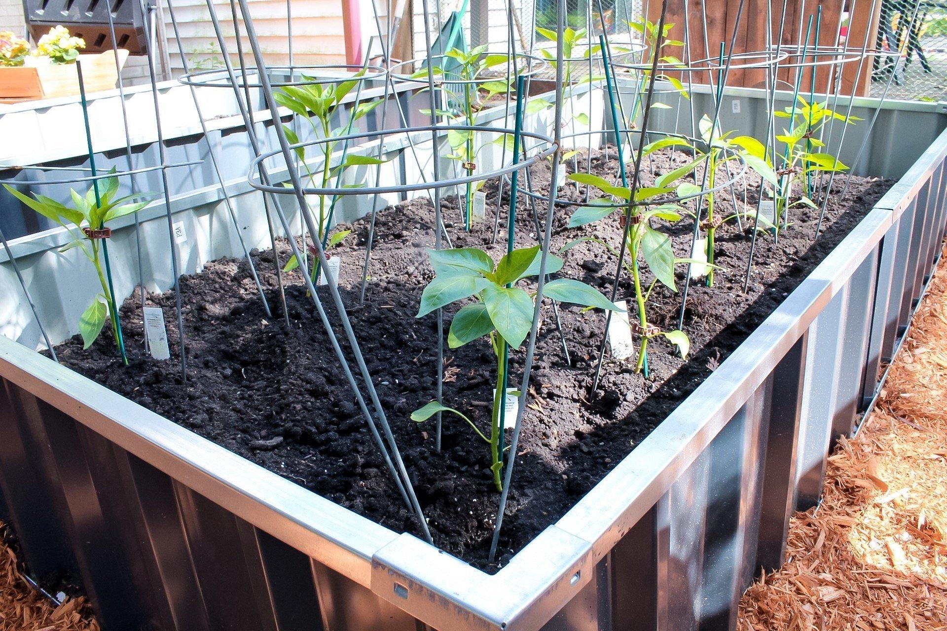 gardening tips - soil