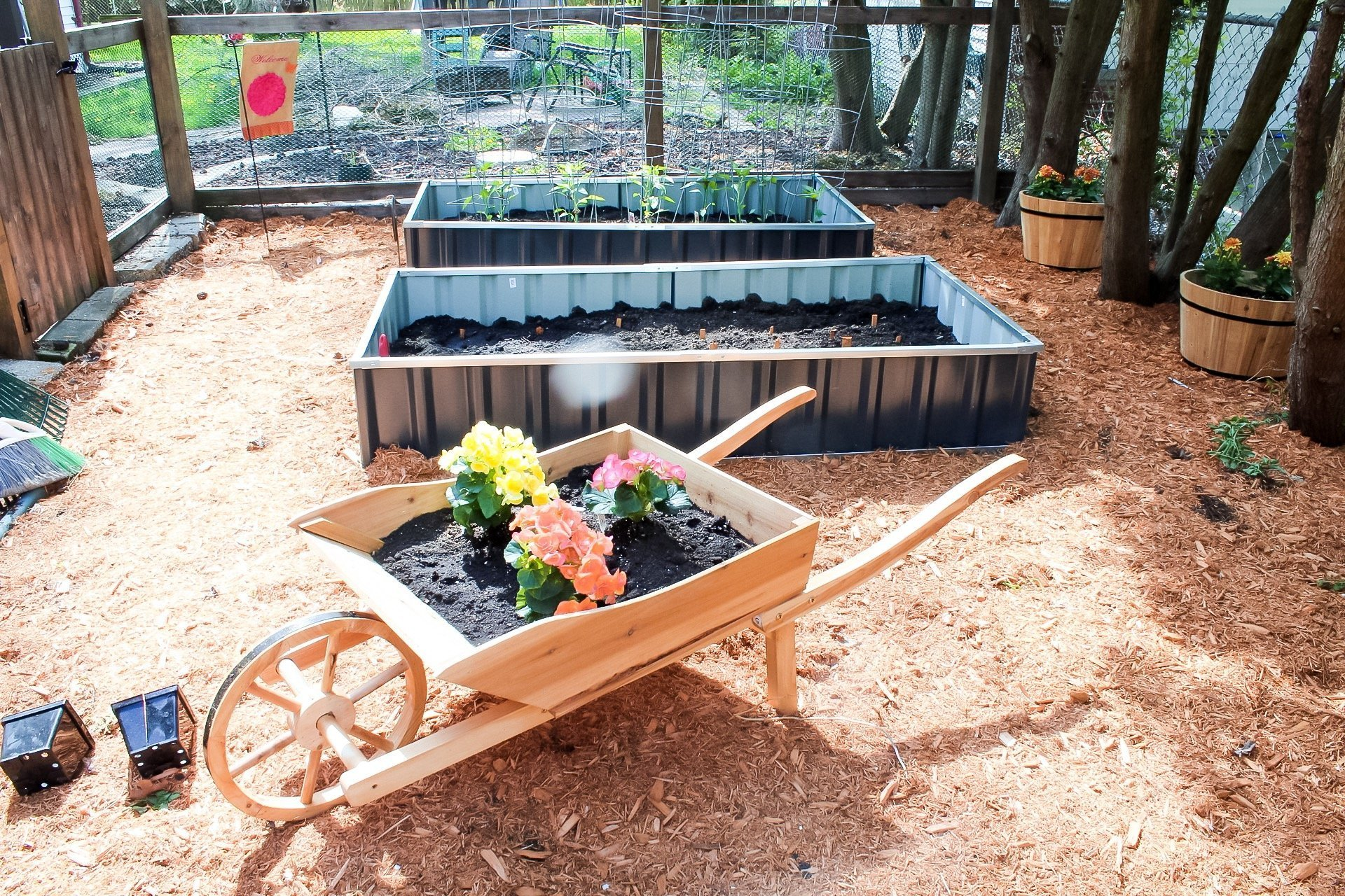 gardening tips - begonias