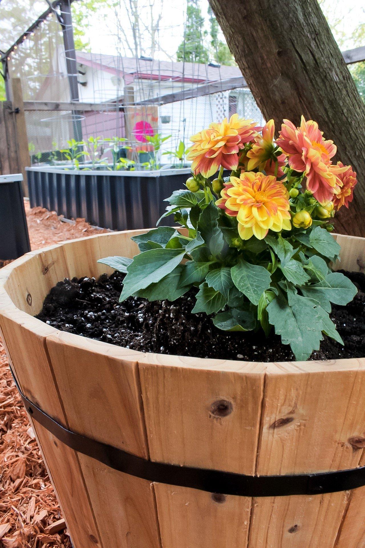 gardening tips - cedar planters