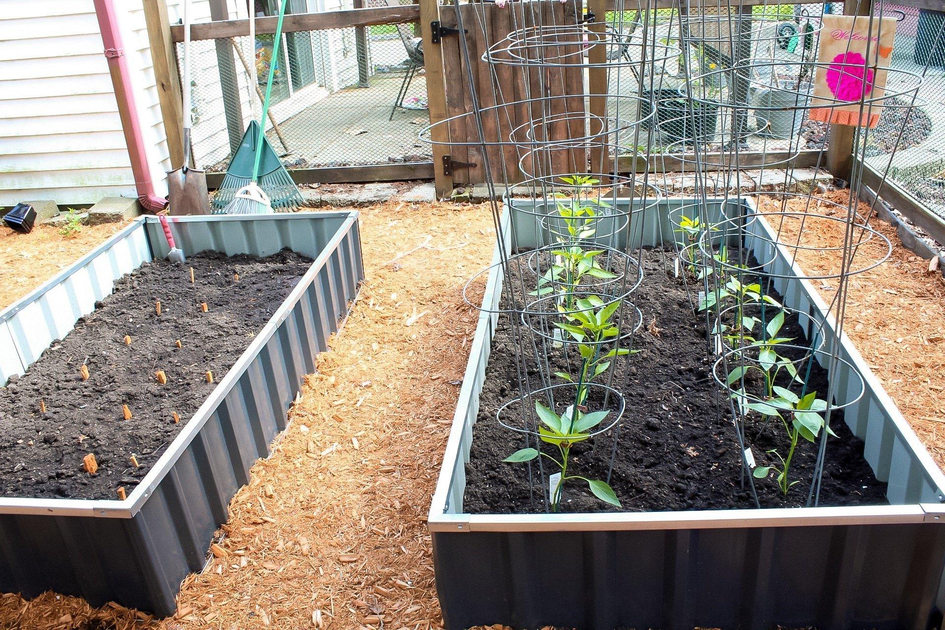 gardening tips veggies