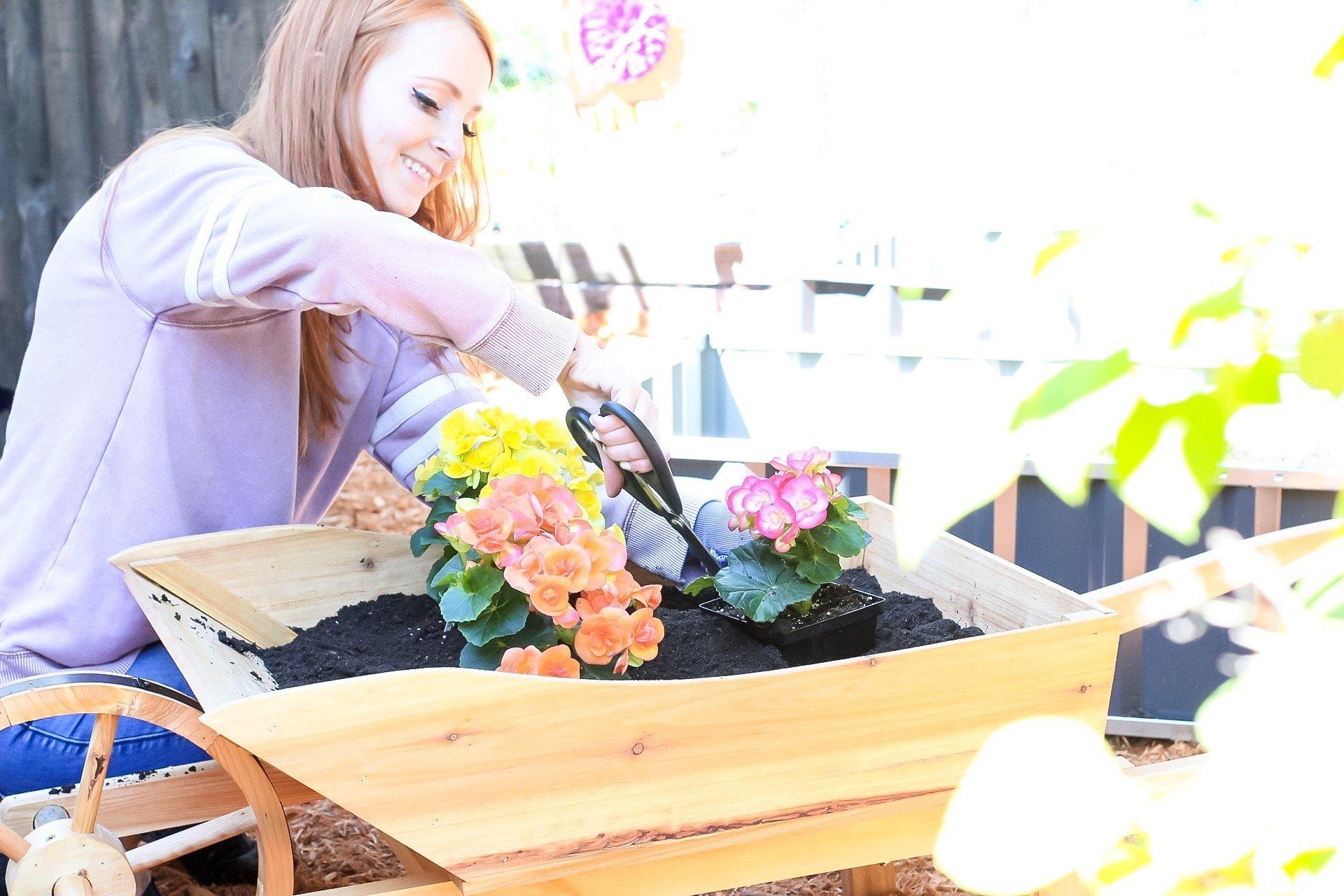 gardening tips - flling up the wheelbarrow