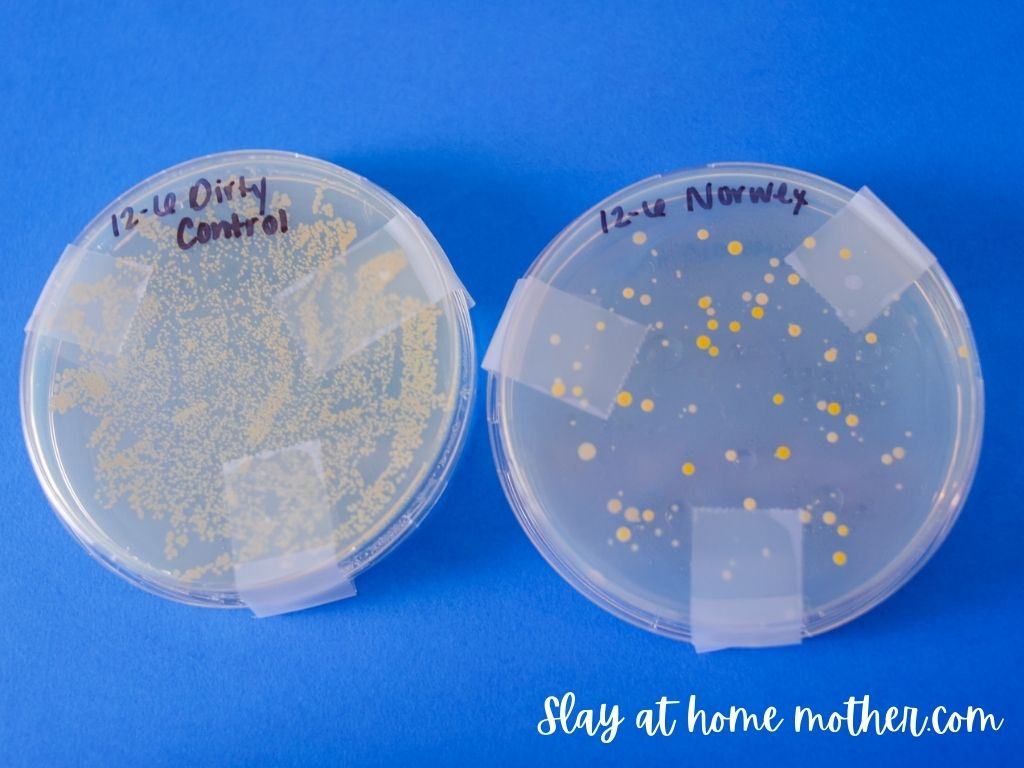 norwex testing results in petri dish